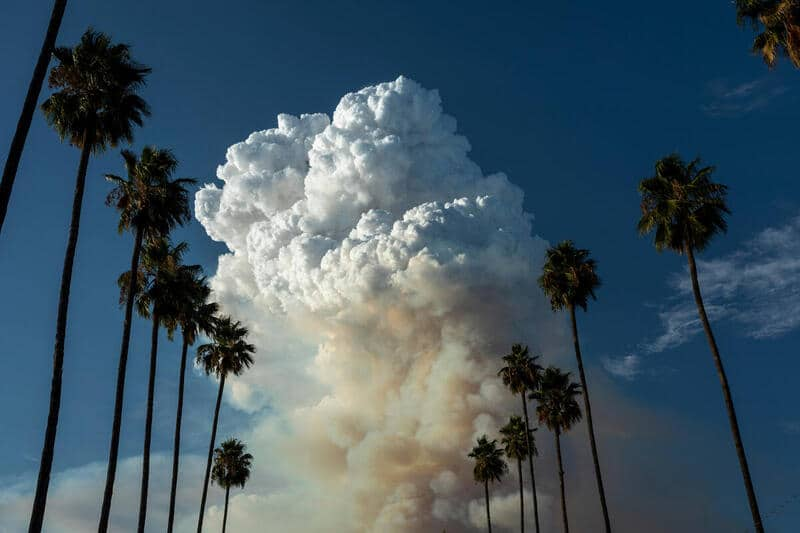 A massive pyrocumulus cloud forms atop a smoke plume, framed between rows of palm trees.