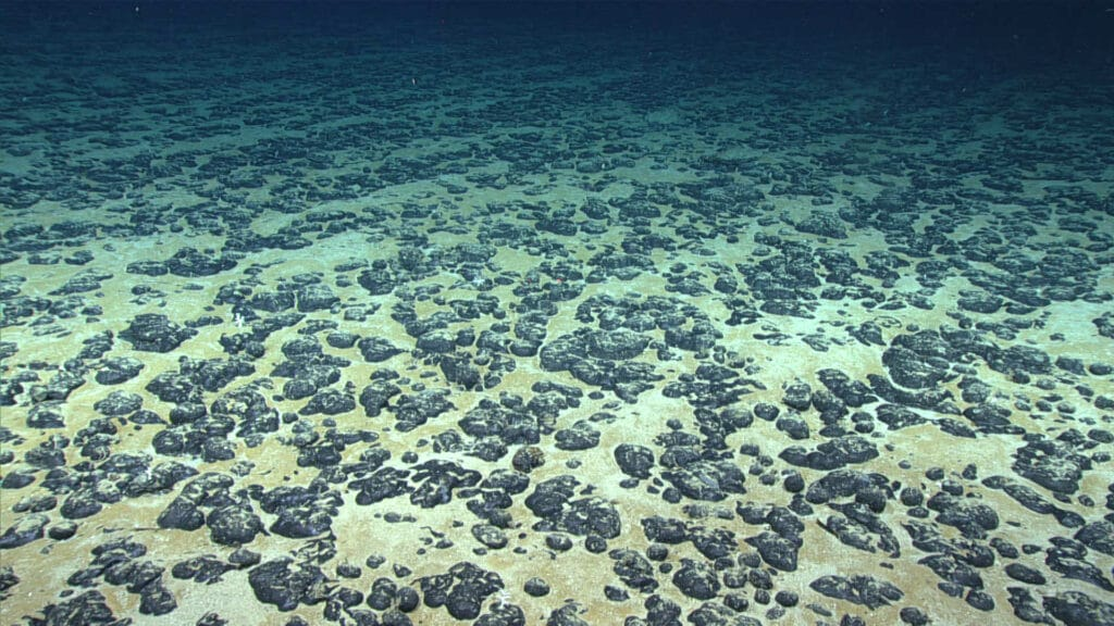 The deep-sea floor covered in small rounded grayish rocks on a sandy bottom